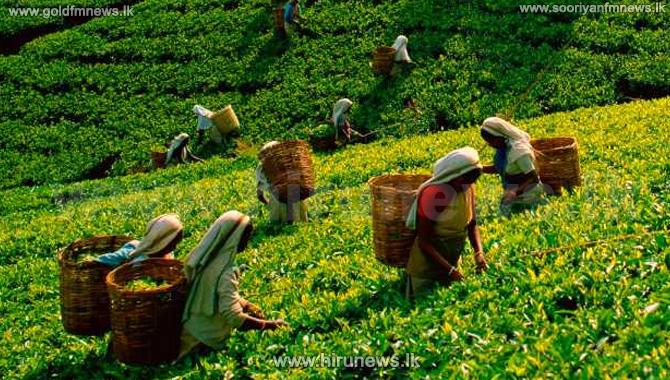 Local+tea+industry+in+crisis