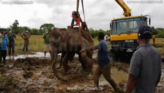 Elephant+dies+after+being+in+critical+condition+for+over+a+month