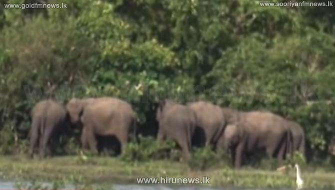 Scenic beauty of Kala Balaluwewa being destroyed every day (Video)
