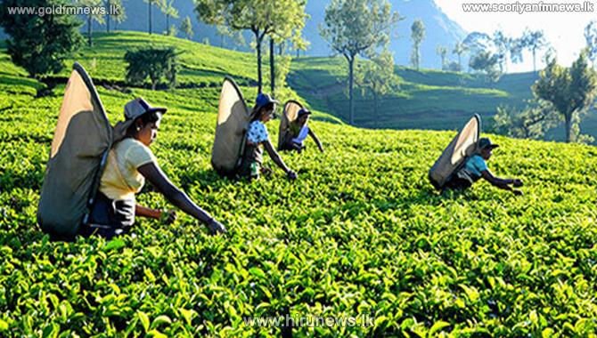 Sri Lanka fetch the highest average price for tea in the world