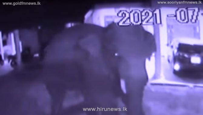 Tusker attacks residents in Wellawaya (Video)